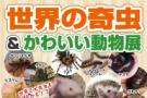 世界の奇虫&かわいい動物展まで残り11日です!!